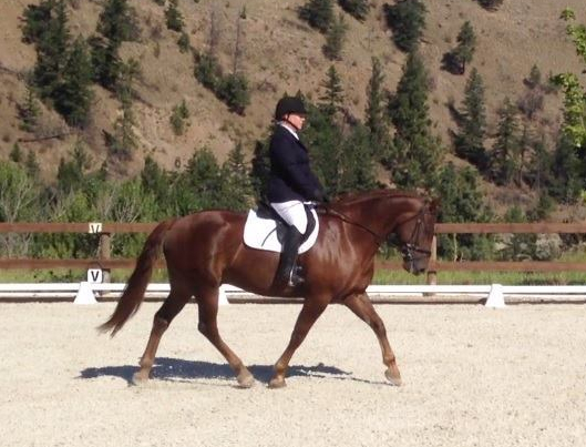 Katie riding Chevy dressage